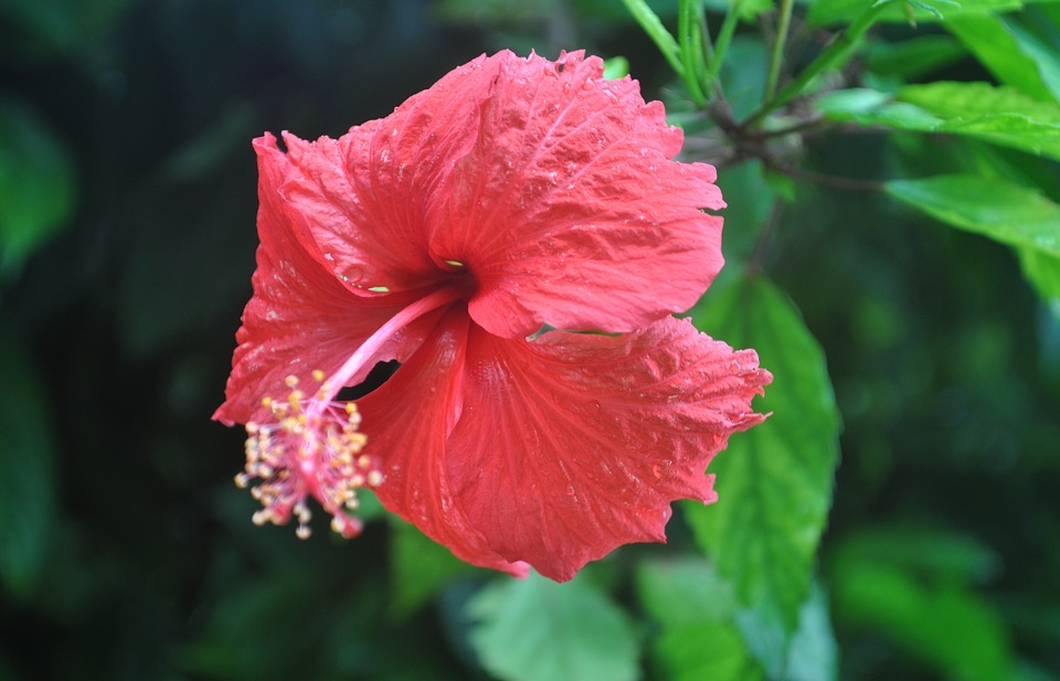 exotic flowers, exotic garden, red