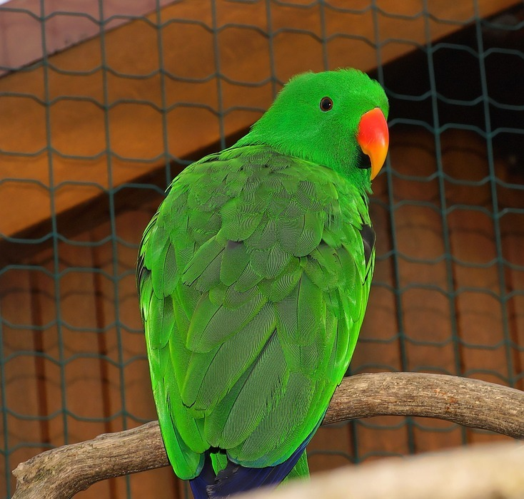 bird, parrot, colorful