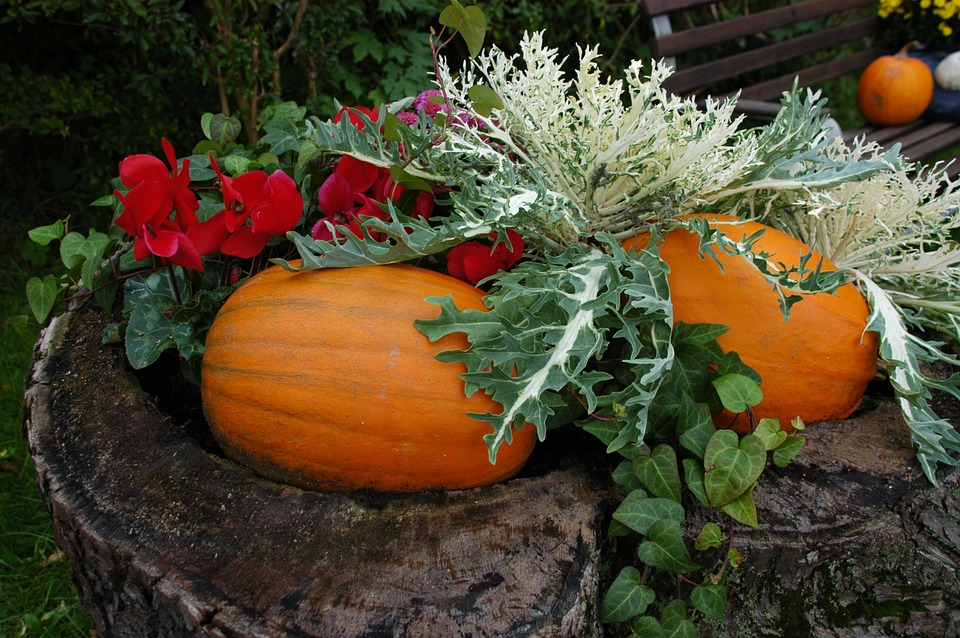 pumpkin, garden, autumn