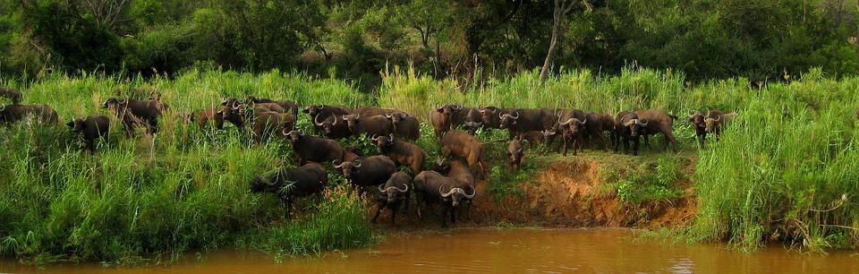 olifants river, south africa, safari