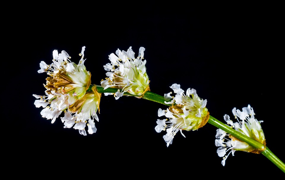 small flower, wild flower, white