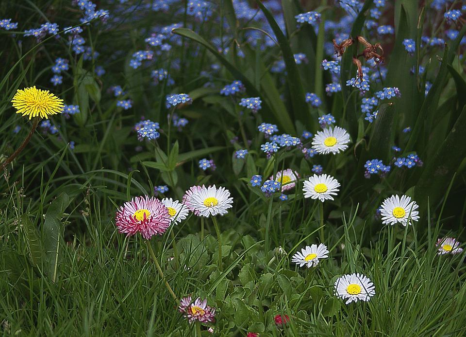 flowers, small flowers, garden flowers