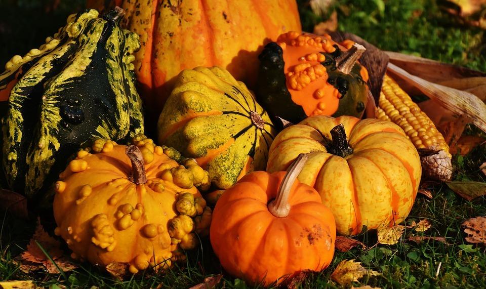 pumpkins, decorative squashes, nature