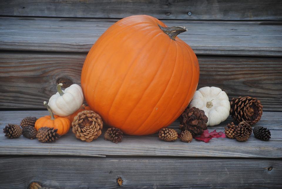pumpkin, thanksgiving, holiday