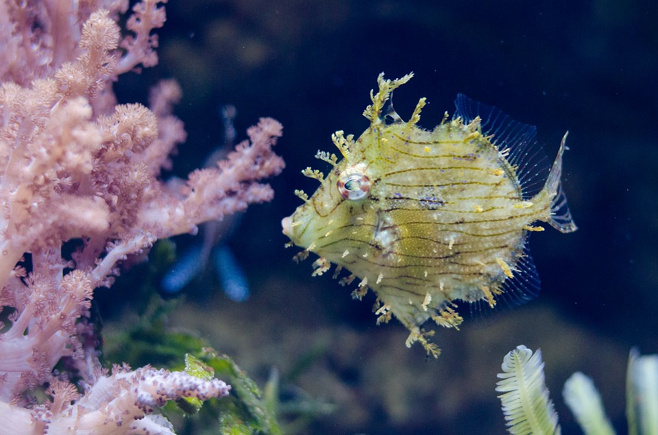 yellow fish, exotic, coral