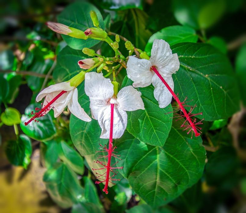 flower, exotic, white