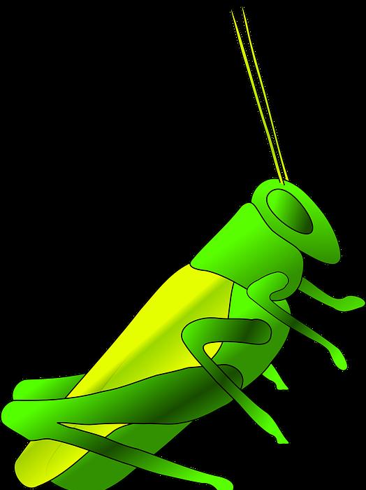cricket, long, green