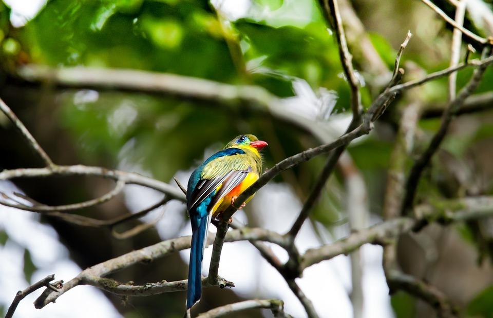 wild birds, colorful, rainforest