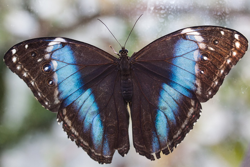 butterfly, exotic, tropics