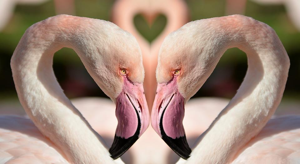 birds, love, colorful