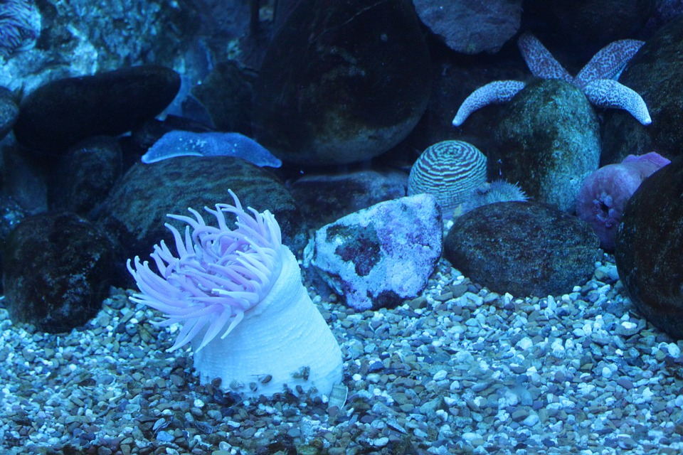anemone, sea, sea animal