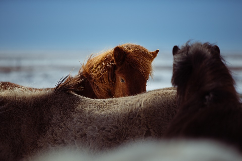 horses, outdoors, sheltering