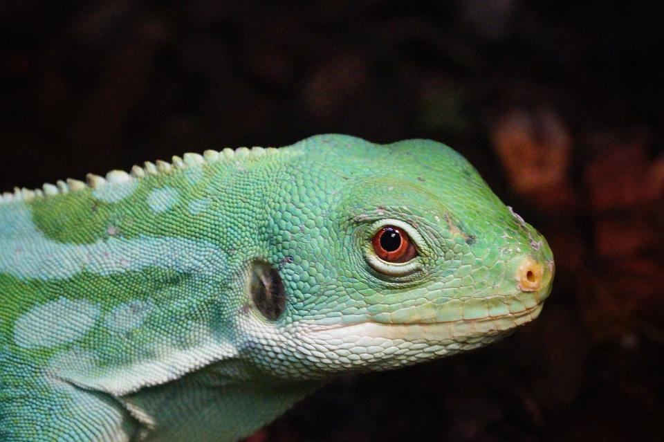 reptiles, terrarium, zoo