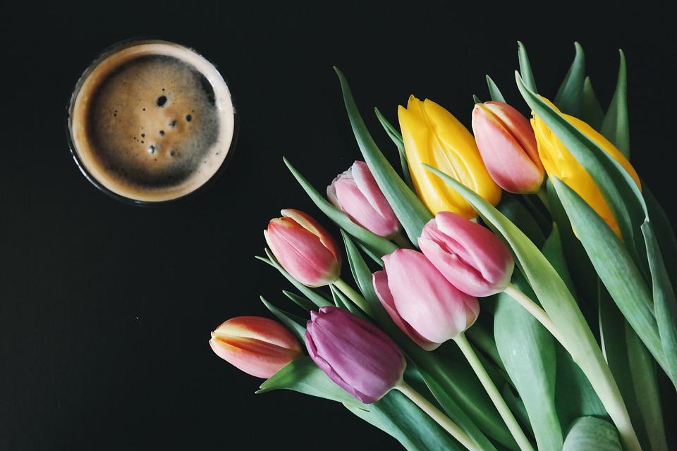 beer, flowers, tulips