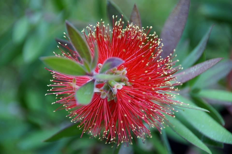 štetkovec, flower, exotic plant