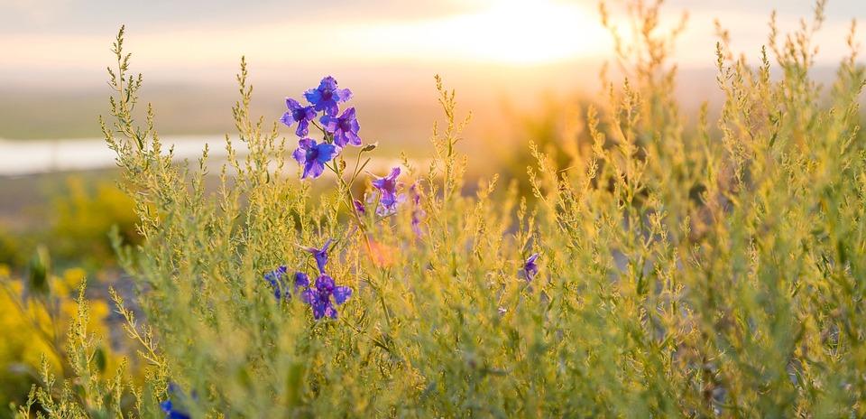 spring, flowers, sun