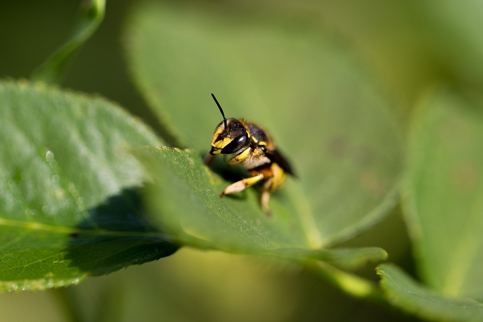 wasp, insect, bug