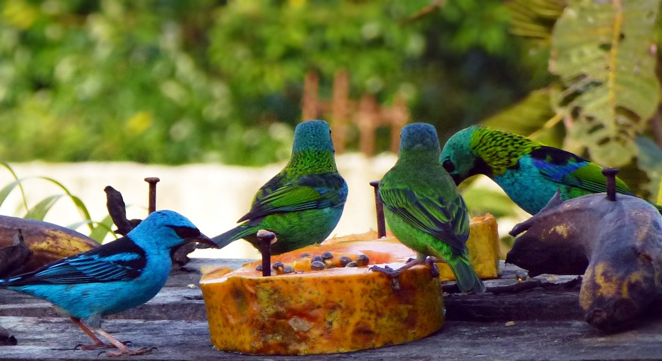 birds, tropical birds, nature