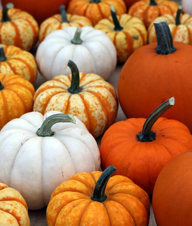 pumpkins, halloween, stems