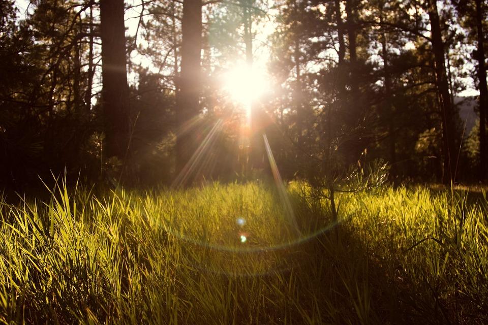 sunlight, forest, nature