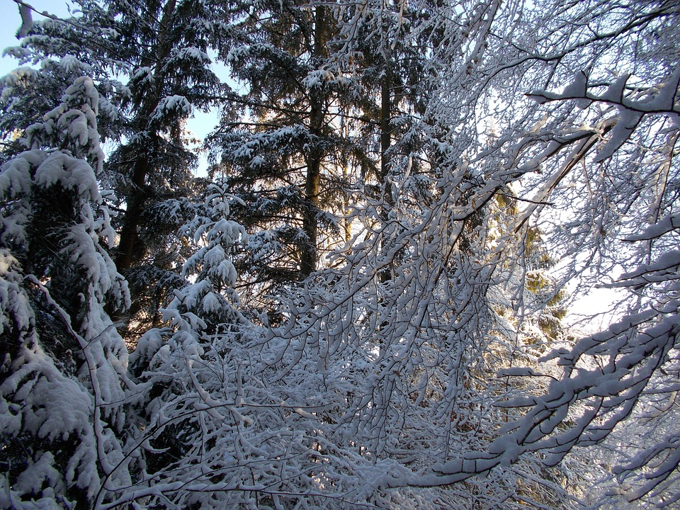 snowy, snow, winter