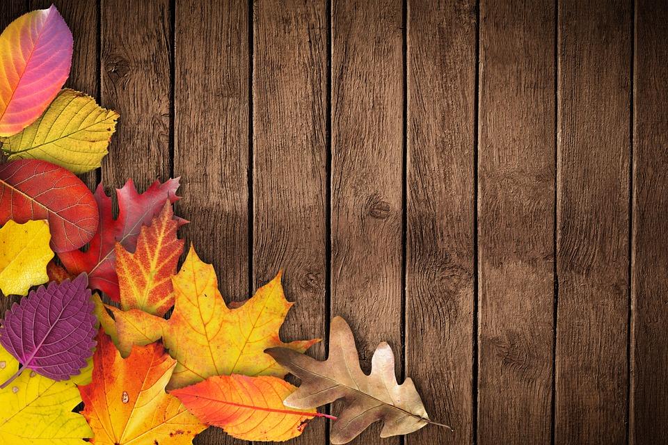 autumn, banner, poster