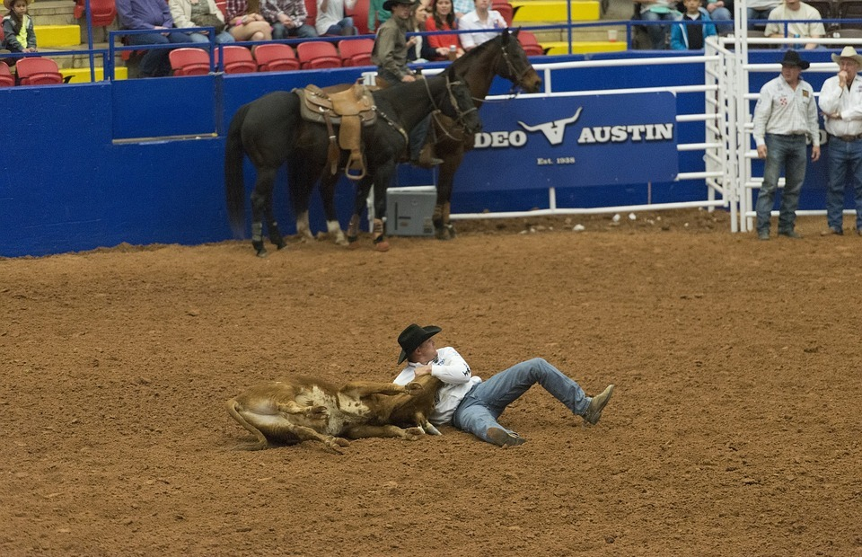 rodeo, steer wrestling, competition