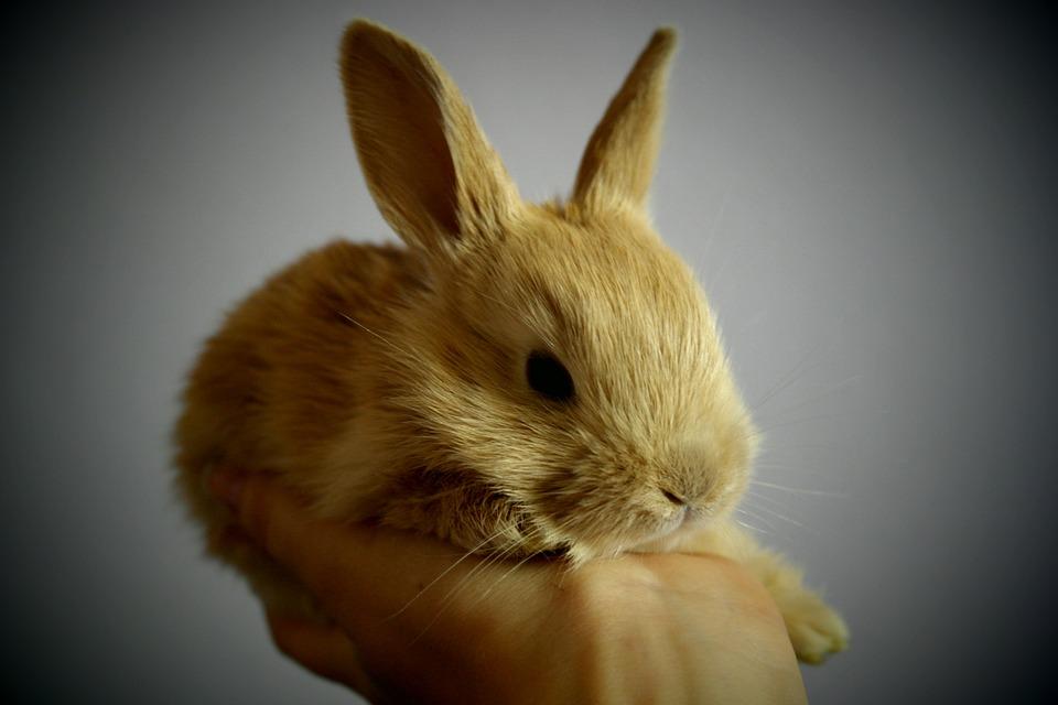 rabbit, small, light brown