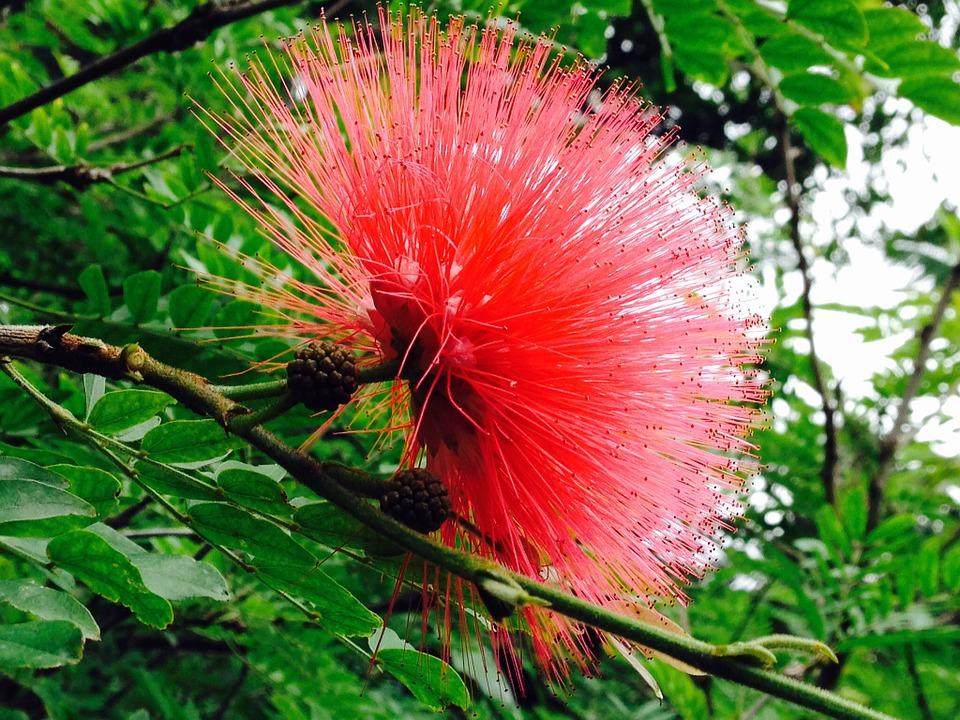 exotics, blossom, bloom
