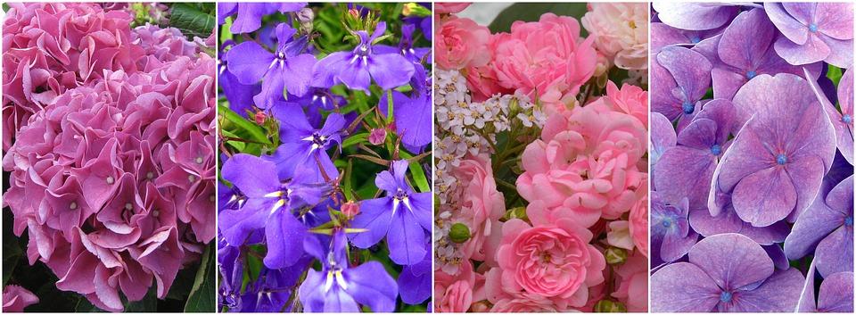 flowers, collage, hydrangeas