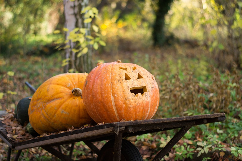 autumn, halloween, nature