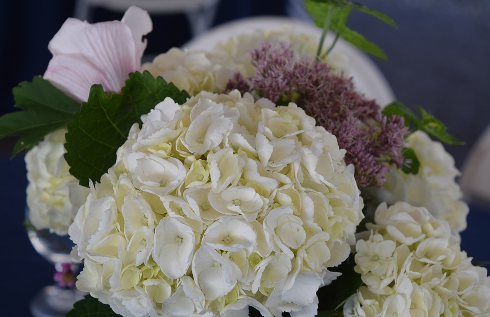 hydrangea, wedding flowers, white hydrangea