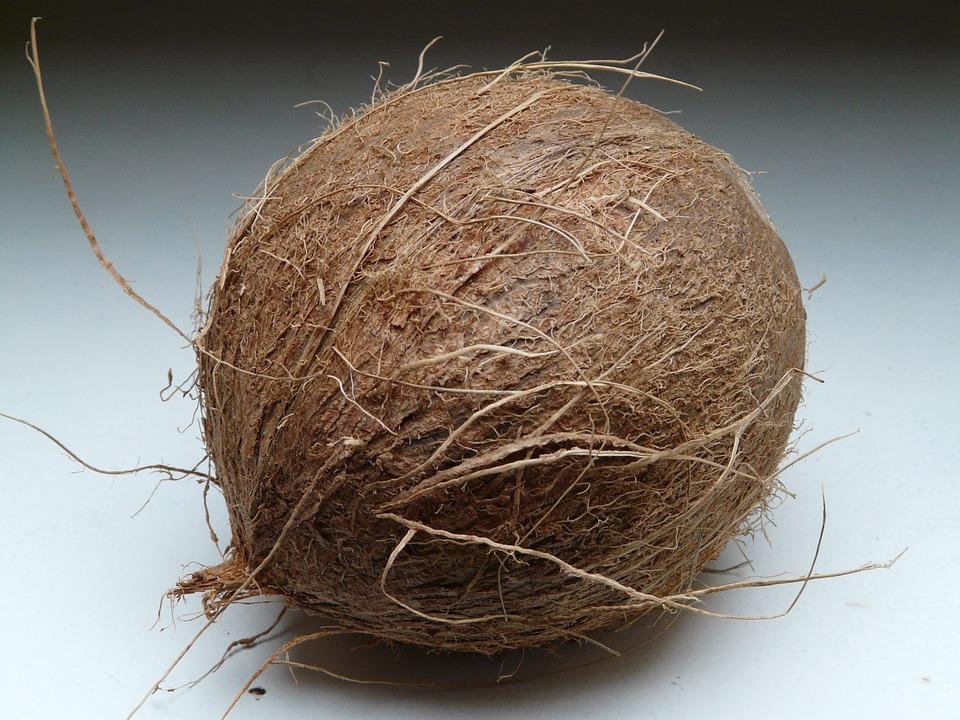 coconut, coconuts, exotic