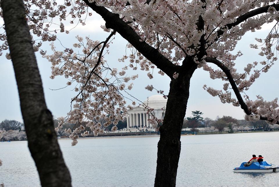 jefferson, memorial, blossom