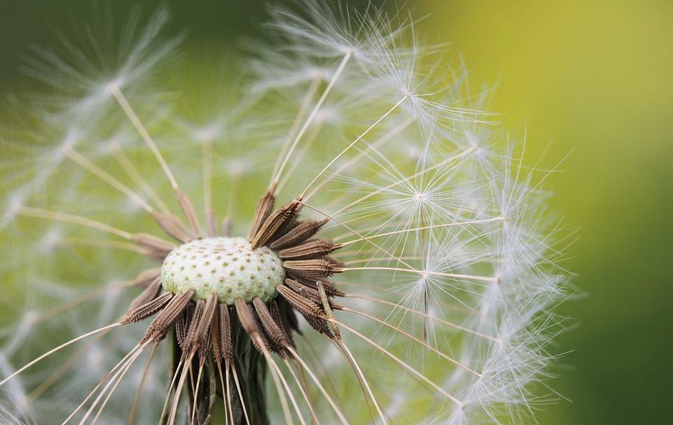 flower, nature meadow, garden