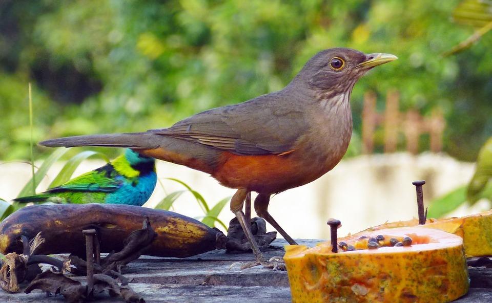 birds, colorful birds, tropical birds