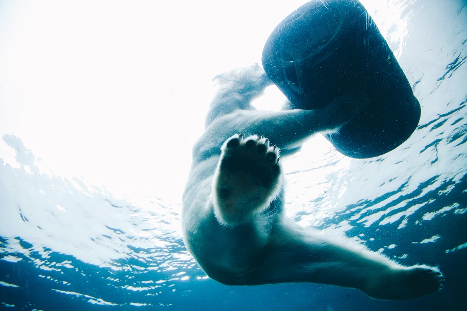 winter, bear, ocean