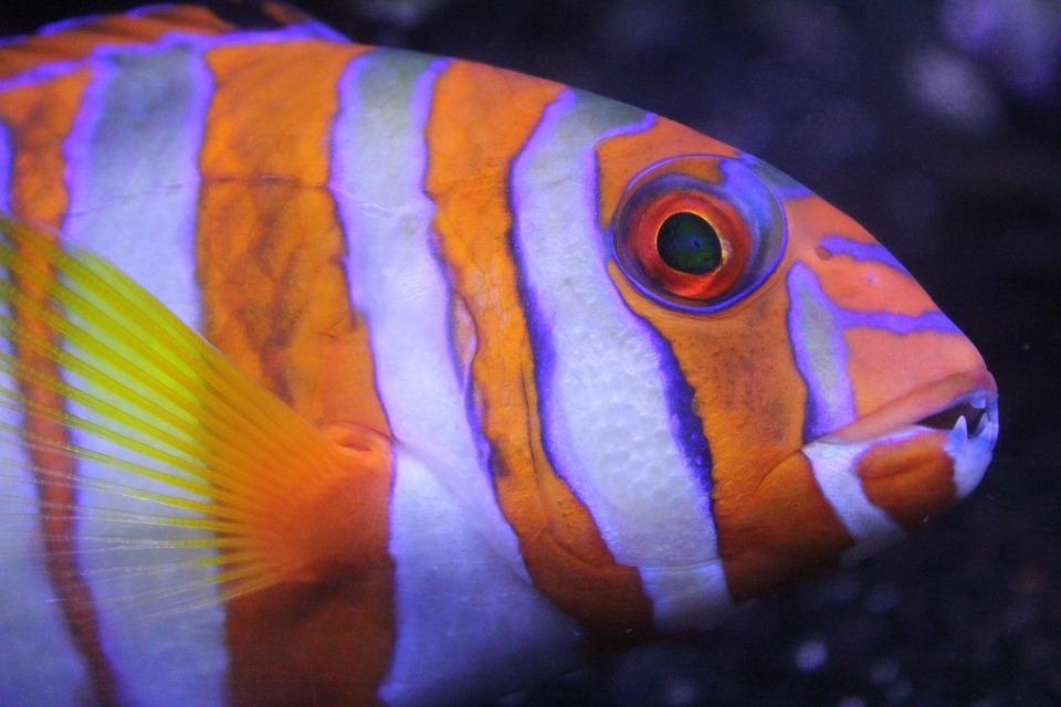 fish, colorful, underwater