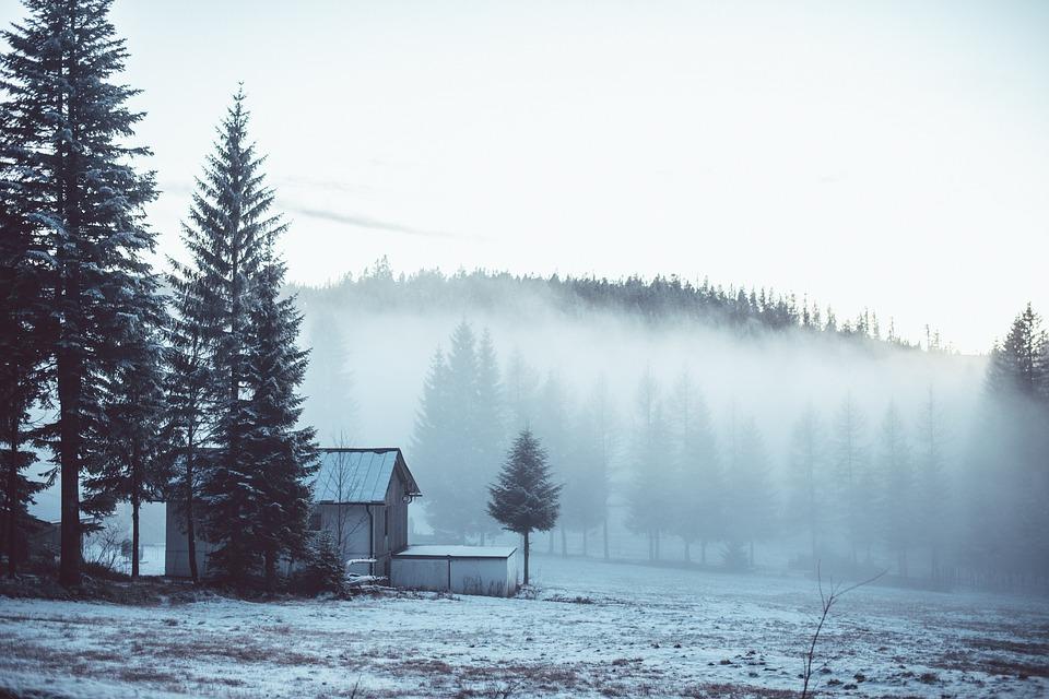 fog, house, tree