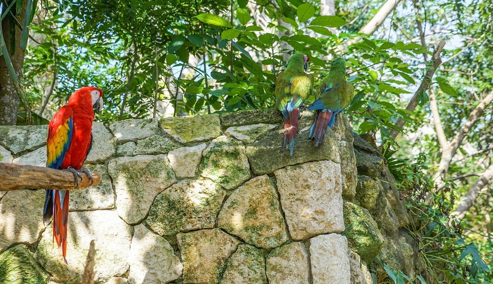 parrots, birds, tropical
