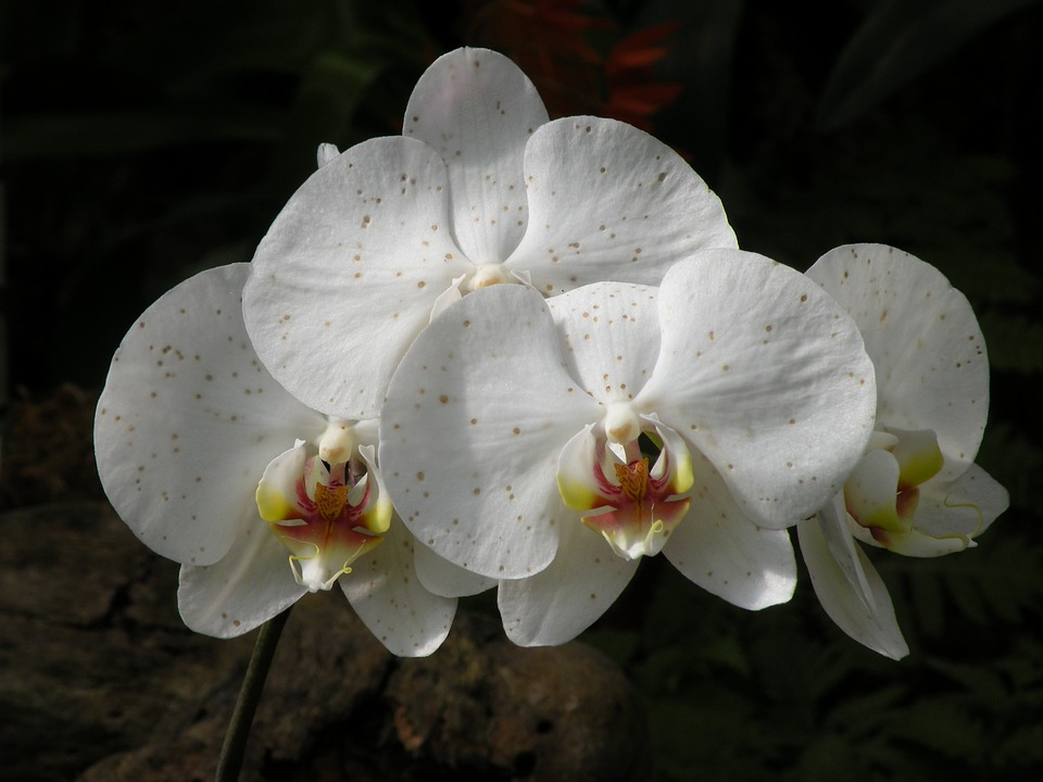 white, flowers, exotic