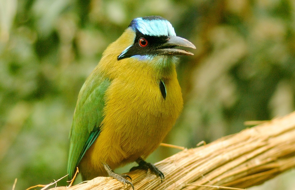 bird, exot, exotic