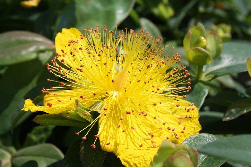 flower, exotic, petal
