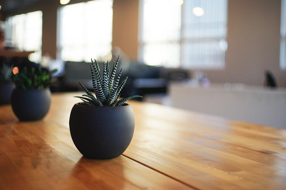 plant, houseplant, indoor