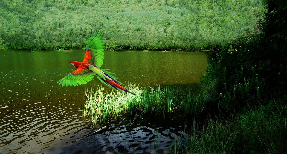 bird, arara, tropical bird