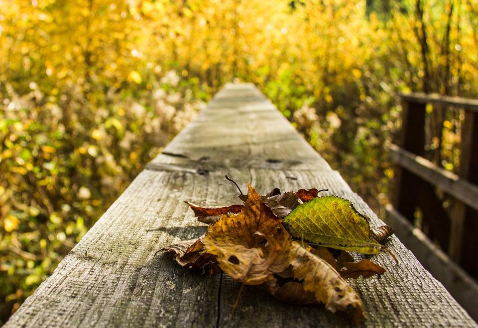leaves, autumn, autumn forest
