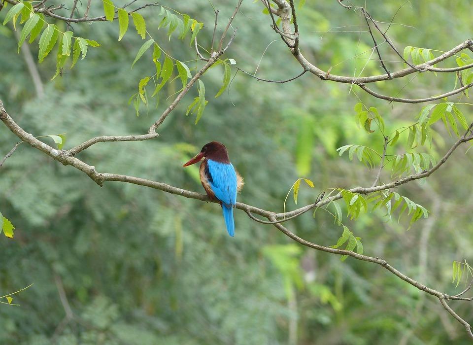 bird, colorful, blue