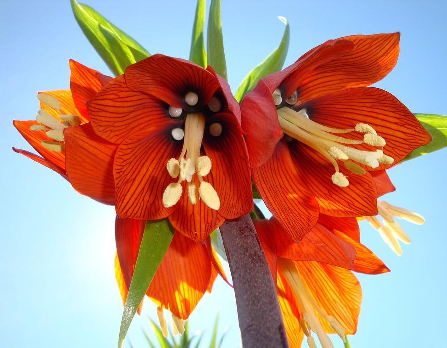 wild flower, exotic, flowering