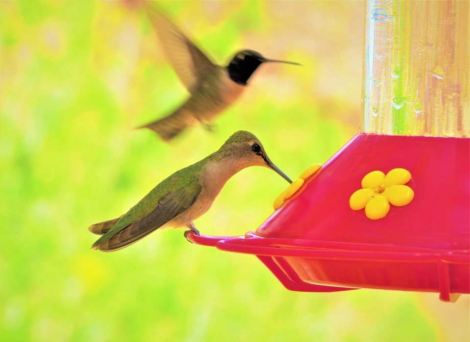 humming bird, colorful, green
