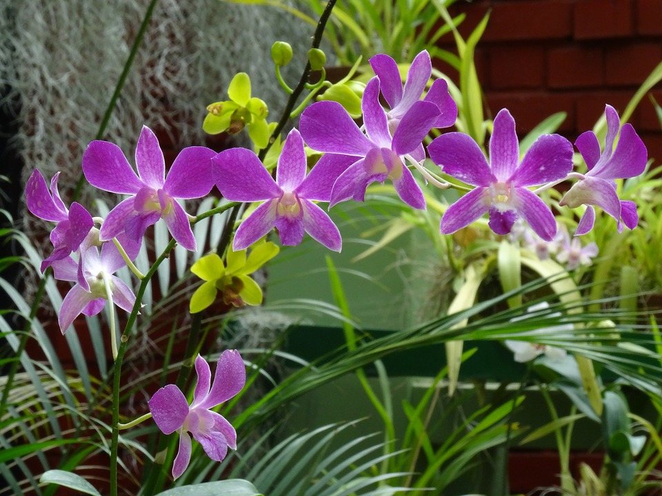 orchid, purple flower, exotic